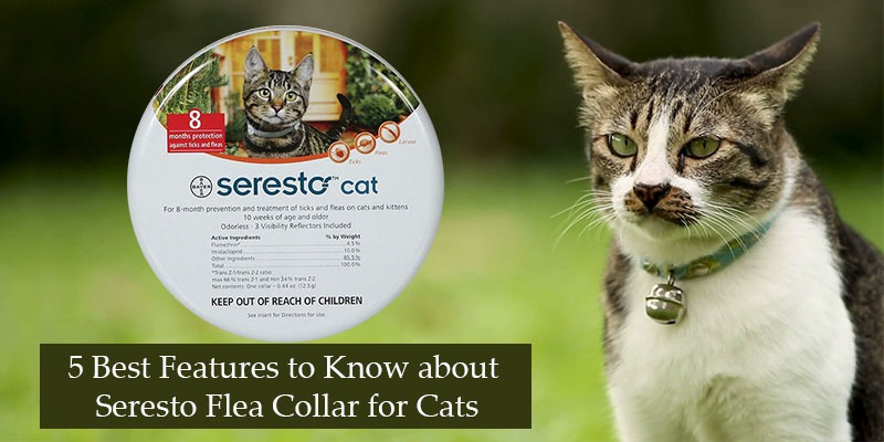 5 Best Features to Know about Seresto Flea Collar for Cats