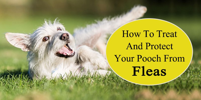 How to treat and protect your pooch from fleas