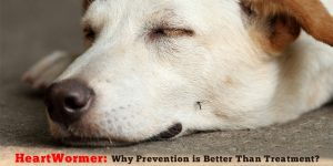 CanadaVetCare Heartwormer Preventions is better than treatments