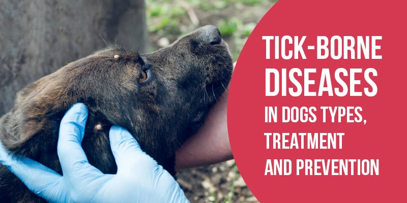 Tick Borne Disease in Dogs - CanadaVetCare