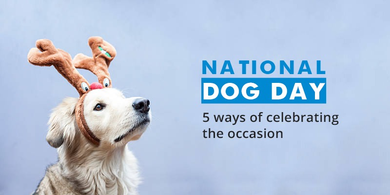 5-ways-of-celebrating-CanadaVetCare