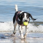Best Dog Beaches You Should Visit on Labor Day