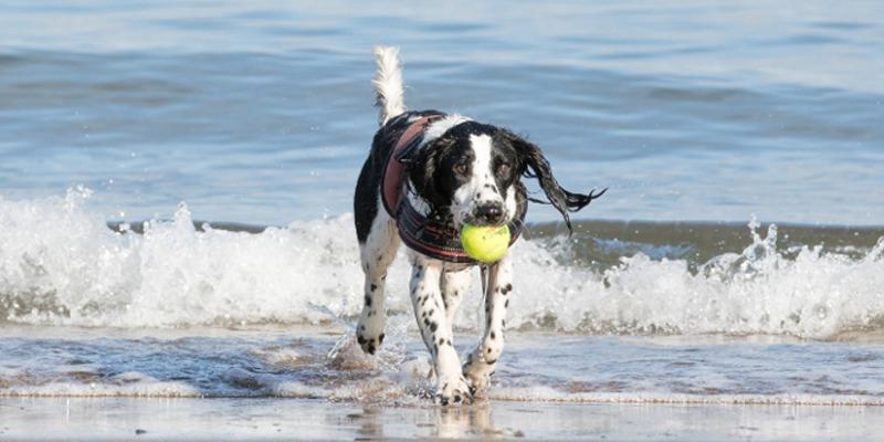Best-Dog-Beaches