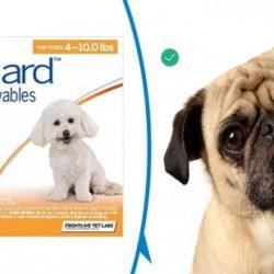 nexgard-for-dog-review