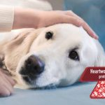Getting To Know About National Heartworm Awareness Month