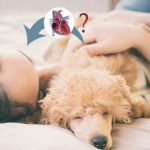Can Heartworm be Passed from Dog to Human?
