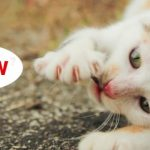 7 Interesting Reasons Cats Meow