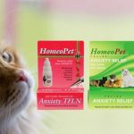 Homeopathic Treatments That Are Best For Cats