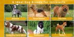 6 Ideal Dog Breeds for Introverts