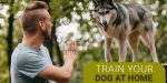 TRAIN YOUR DOG AT HOME: TIPS TO REMEMBER