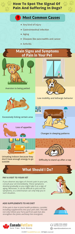 Animal-Pain-Awareness-Month