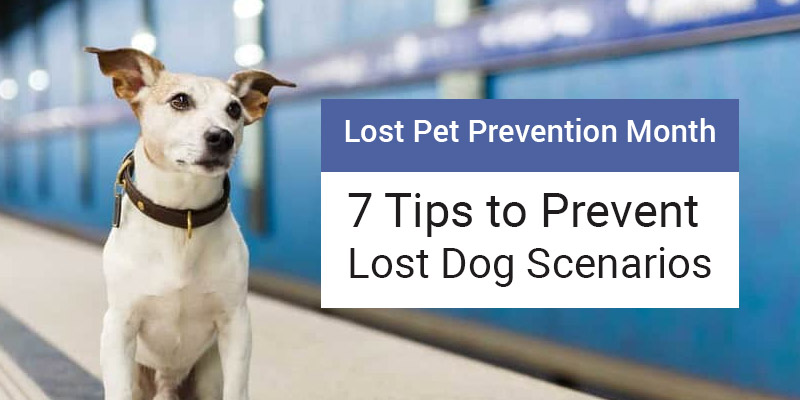 Lost Pet Prevention Month – 7 Tips to Prevent Lost Dog Scenarios