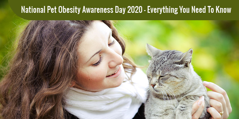 National Pet Obesity Awareness Day 2020 – Everything You Need to Know