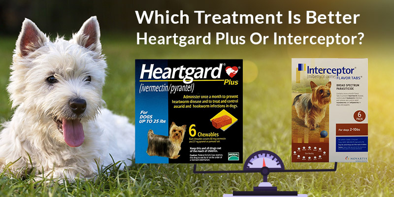 which-treatment-is-better-heartgard-plus-or-interceptor