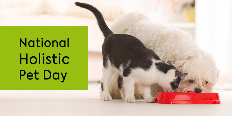 Help your pet live a holistic life