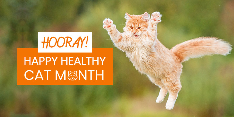 HOW TO CELEBRATE 'Happy, Healthy Cat Month?